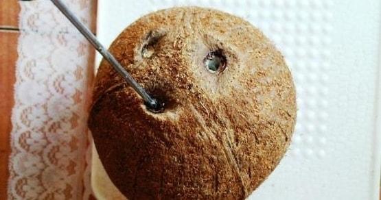 kak pochistit kokos