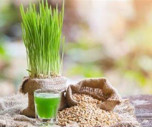 Проросшая пшеница польза