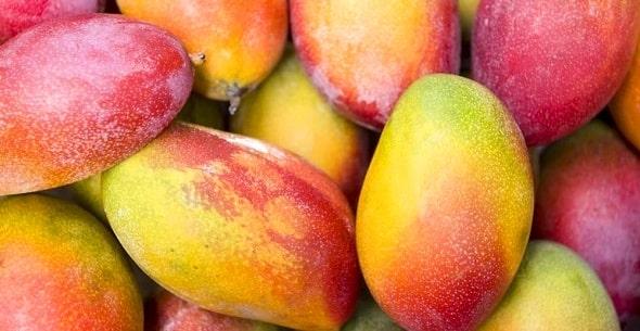 kak vybrat speloe mango 1